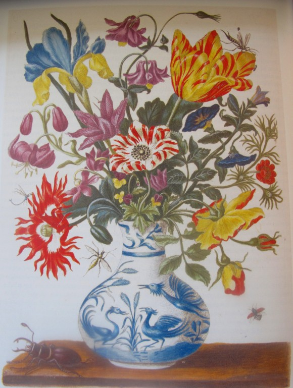 Maria Sibylla Merian voorjaarsbloemen tulpen 580x769 Google doodle vandaag Maria Sibylla Merian