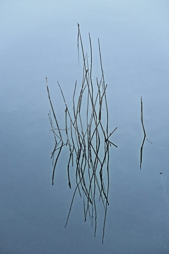 water reed zen still